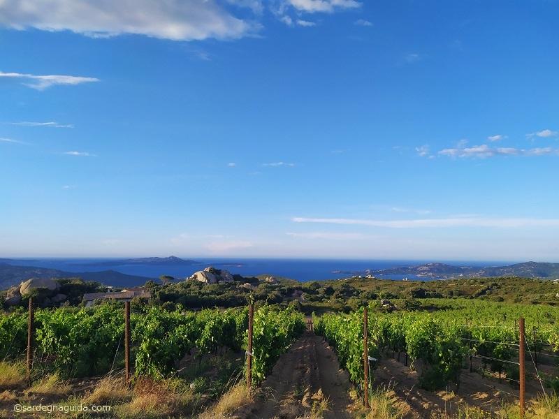 サルデーニャ 海が見えるブドウ畑 テヌータマッテーウ