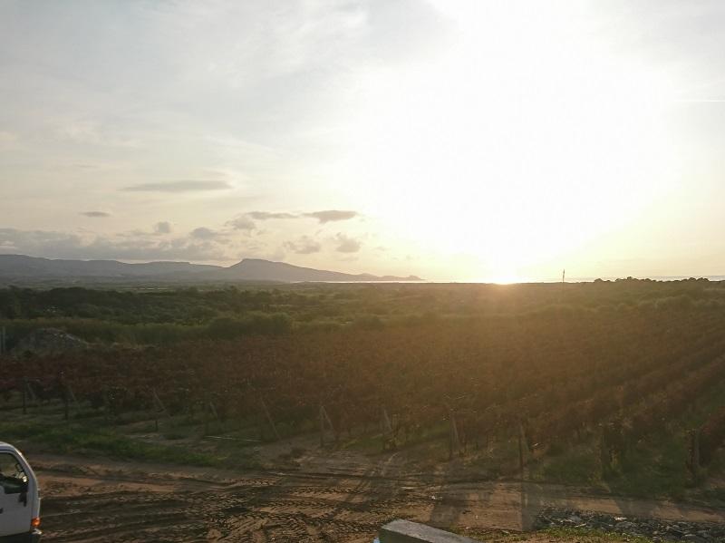 海が見えるブドウ畑 ヴェルメンティーノ アマービレ